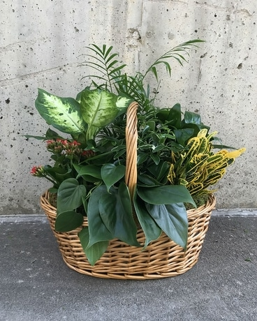 Designer's Choice Garden Basket