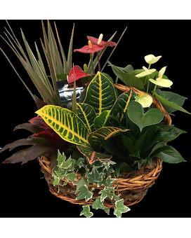 Basket Planter Plant