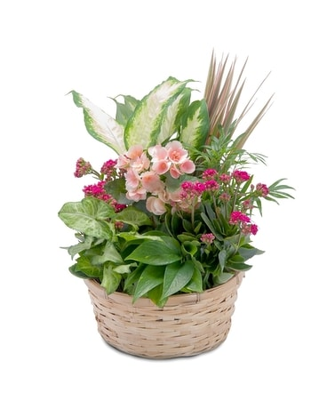 Lush Dish Garden in Murfreesboro TN - Rion Flowers and Gifts