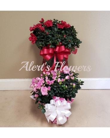 Azalea Plant Flower Arrangement
