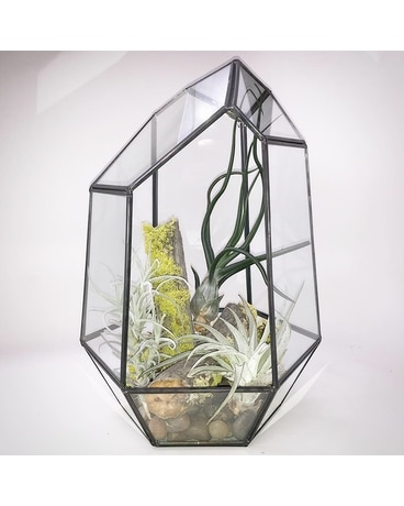 Deluxe Black Geometric Terrarium Custom product