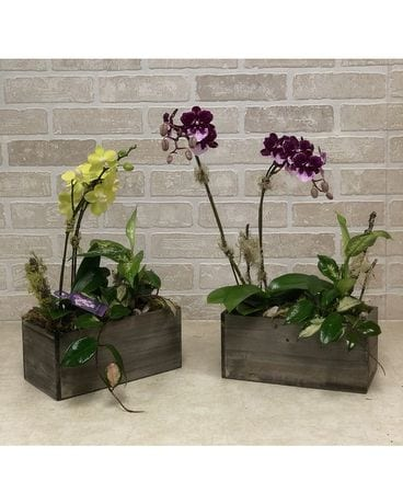 Tropical Orchid Box Plant