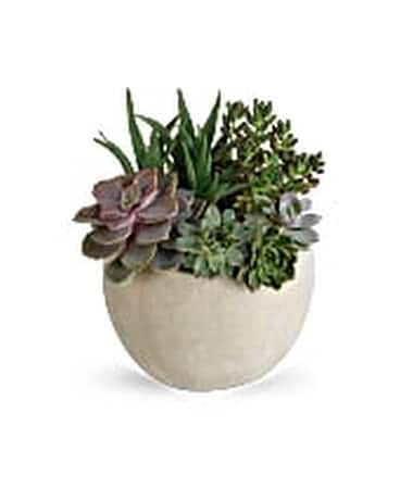 DESERT BEAUTY SUCCULENT GARDEN Flower Arrangement