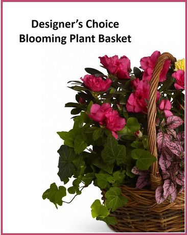 Designer's Choice - Blooming Plant Basket Flower Arrangement