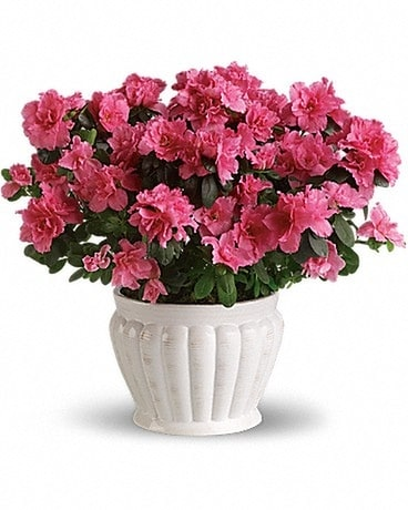 Pretty In Pink Azalea Flower Arrangement