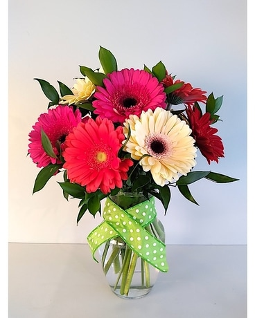 SUPER GERBERA DEAL   10 Stems Arranged in VASE