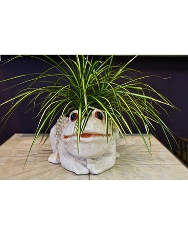 Froggy Liscious Dish Garden Plant