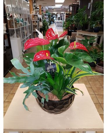 Anthurium Garden  Order Early Dish Garden Plant