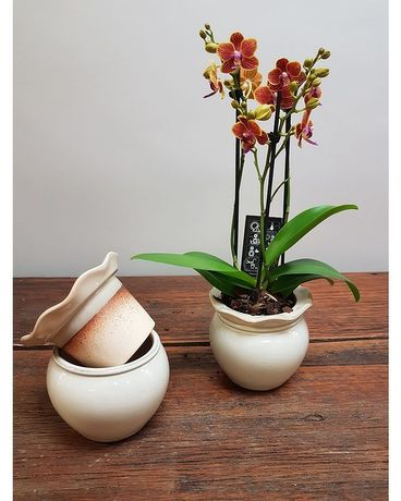 Self Watering Orchid  What a GREAT IDEA! Plant