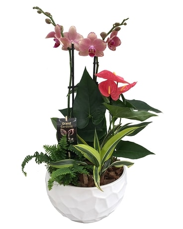 The Orchid and Anthurium Planter Plant