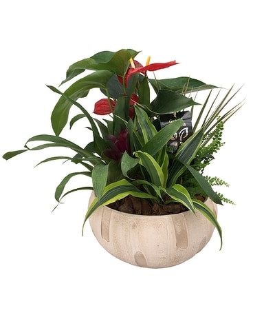 The Anthurium Tropical Planter Flower Arrangement