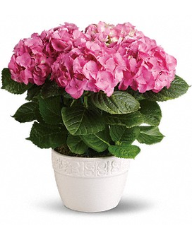 Happy Hydrangea - Pink Flower Arrangement