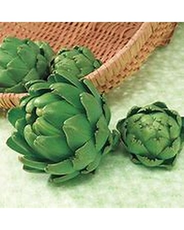 4in Pot: Artichoke - Imperial Star