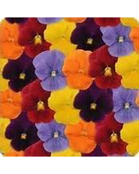 Pansy - Matrix Mix