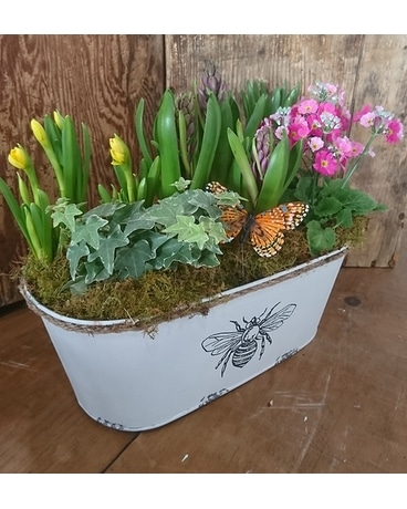 Bee and Butterflies Plant