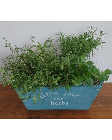 Grow your own Herbs Plant