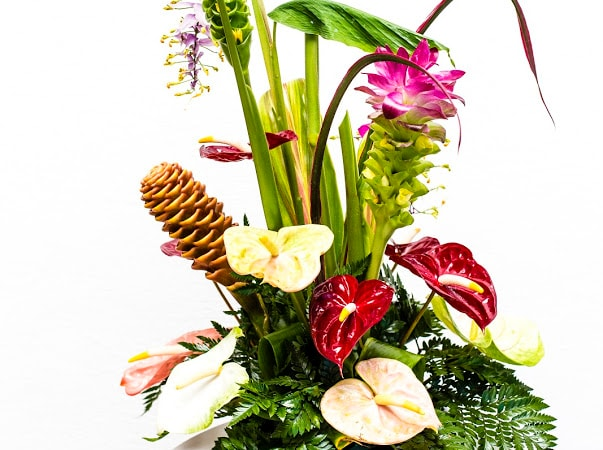 Spring or tropical flowers Special of the Day