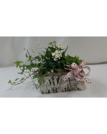 Frosty Fern Planter with White Kalanchoe Plant