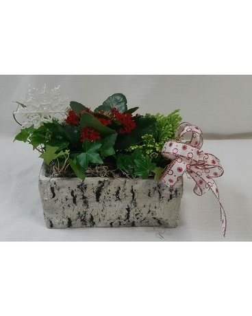 Frosty Fern Planter with Red Kalanchoe Plant