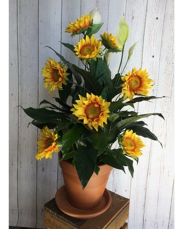 Spath with permanent Sunflowers Plant