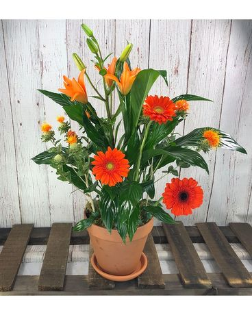 Spath with Orange Fresh Flowers Flower Arrangement