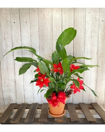 Spath With Permanent Poinsettias Dish Garden Plant