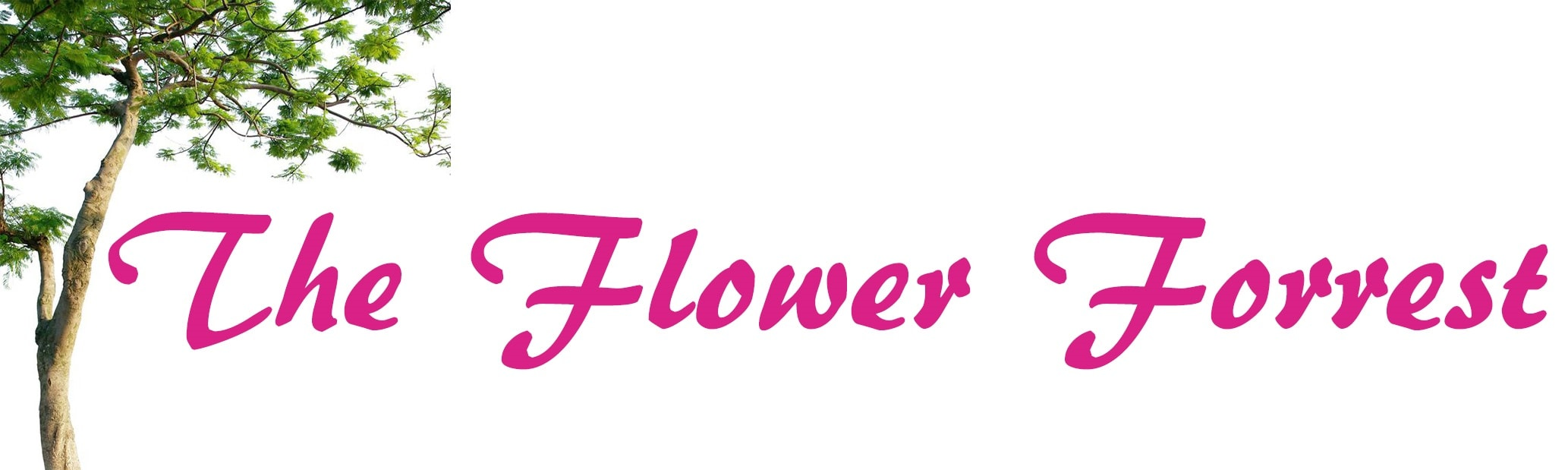 San Antonio Florist & Full Service Flower Shop | The Flower Forrest