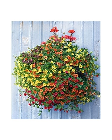 Sun Hanging Basket