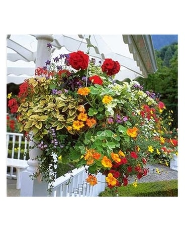 Shade Hanging Basket