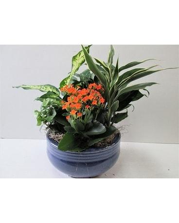 Medium Ceramic Garden Hs 480 In Worcester Ma Holmes Shusas
