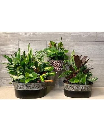 Dish Garden in Ceramic Container Plant