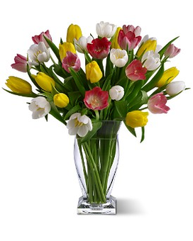 True Love Tulips