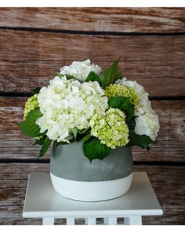 Heavenly Hydrangeas Flower Arrangement