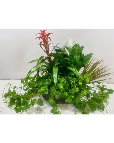 Plant Lovers Basket Flower Arrangement
