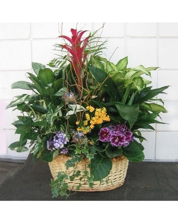 european planter basket Plant