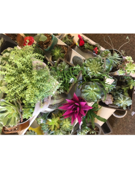 exclusive succulents Flower Arrangement