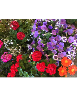 patio annuals Flower Arrangement