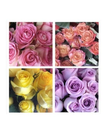 Dozen Roses (Vase Arrangement, pick your color)