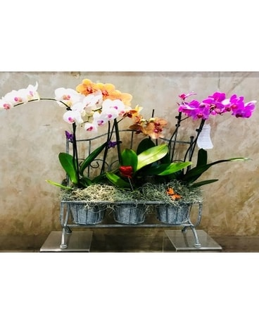 Triple Orchid in Metal Pot Flower Arrangement