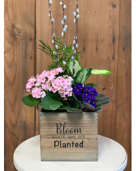 Bloom Where You Are Planted Plant