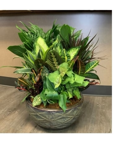 Ceramic Dish Garden-Medium Plant