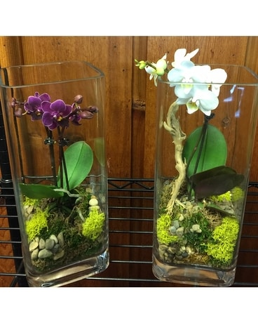 Mini Orchid in Glass Plant