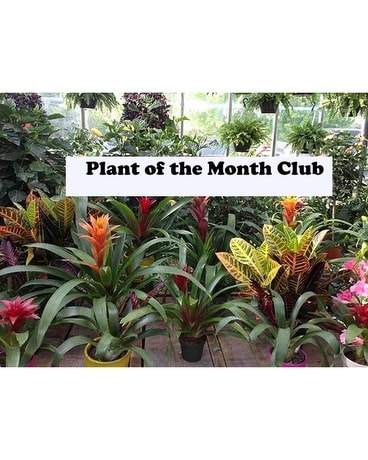 Plant of the Month Club Plant