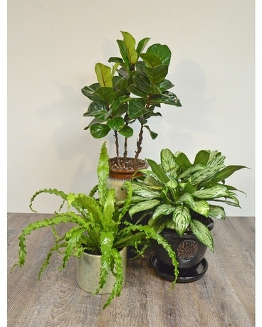 House Plants in Ceramic Plant