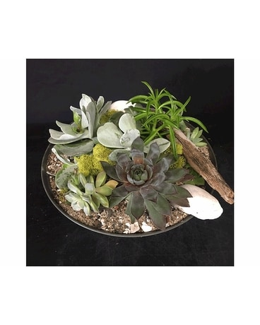 Succulent Bowl Flower Arrangement