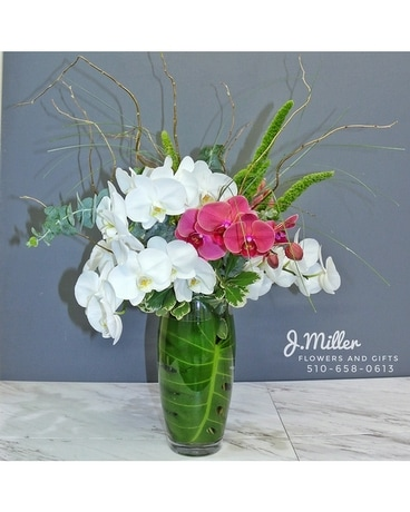 The Elle- Phalaenopsis Orchid Arrangement