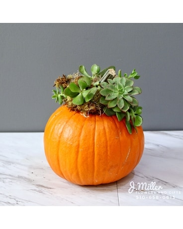 Succulent Crown Pumpkin (3 Varieties) Flower Arrangement