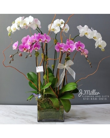Orchid Wish Flower Arrangement
