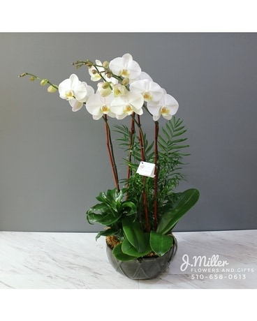 Elegant White Orchids Flower Arrangement ...