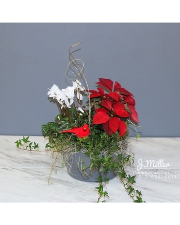 Holiday Dish Garden Flower Arrangement